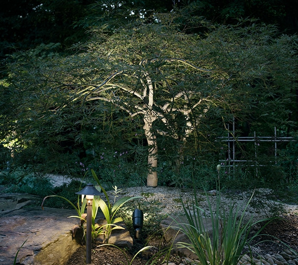 Landscape Lighting Near Garden and Trees